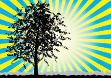 Tree silhouette on sky rays background. Stock Photography
