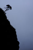 Tree Silhouette on Steep Mountain Slope. A single tree is growing on the steep hillside of the Haleakala Volcano Crater. Maui, Hawaii royalty free stock photography