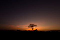 Tree in silhouette style Royalty Free Stock Images