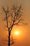 Tree of silhouette style on sunset. Tree of silhouette style on sunset in the evening Stock Photos
