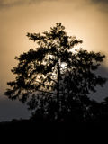 Tree silhouette with sun in the background Royalty Free Stock Images