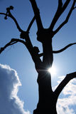 Tree silhouette with sun ray. Silhouette of a naked tree and sun ray with background af blue sky and white clouds Stock Images