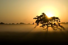 Tree silhouette sunrise. A golden sunrise with mist and a dark tree silhouette stock image
