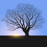 Tree silhouette and sunrise. Background, tree, sunrise, landscape, vector, silhouette, morning, trees, beautiful, nature, illustration, field, wilderness, wood Stock Photo