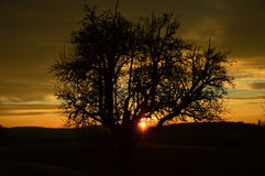 Tree silhouette at sunrise Royalty Free Stock Photography