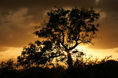 Tree silhouette at sunset Stock Photography