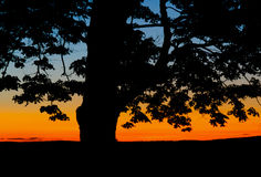A tree silhouette at sunset Royalty Free Stock Image