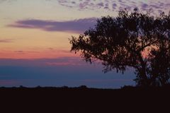 Tree silhouette at sunset Royalty Free Stock Photography