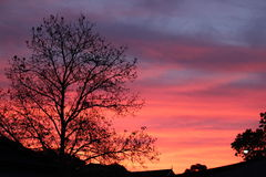 Tree Silhouette At Sunset Stock Photo