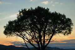 Tree Silhouette at Sunset Stock Images