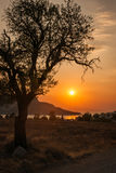 Tree silhouette on sunset background, Aegina, Greece Royalty Free Stock Photography