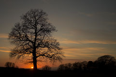 Tree silhouette sunset Royalty Free Stock Images