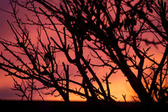 Tree silhouette at sunset. Silhouette of bare branches on tree against red and orange skies at sunset stock images
