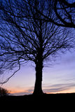 Tree Silhouette at Sunset. A bare tree stands in silhouette against the backdrop of a winter sunset Royalty Free Stock Photography