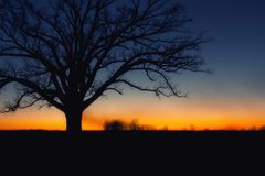 Tree silhouette at sunset Stock Photos