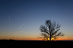 Tree silhouette by sunset Royalty Free Stock Photos