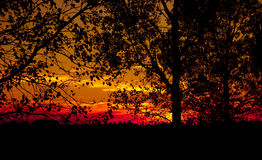 Tree Silhouette at Sunset. Tree silhouette in a hot summer sunset Royalty Free Stock Photos