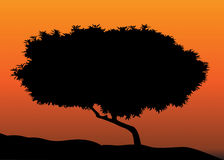 Tree silhouette in sunset Stock Image
