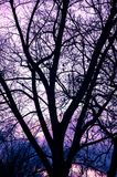 Tree silhouette during sunset Royalty Free Stock Photo