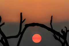 Tree silhouette on sunset over the sea in Maldives Stock Image