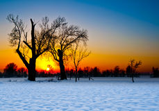 Tree Silhouette at Sunset in a Snowy Landscape Stock Photo