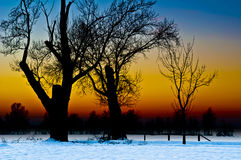 Tree Silhouette at Sunset in a Snowy Landscape. Tree silhouette at sunset in a desolate and snowy countryside landscape Stock Photo