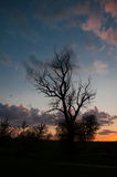 Tree silhouette at sunset, vertical view Royalty Free Stock Images