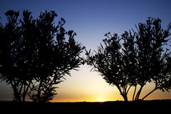 Tree silhouette in sunset Royalty Free Stock Images