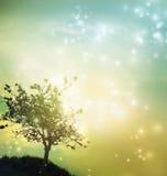 Tree silhouette at twilight Stock Photos