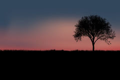 Tree silhouette. With twilight sky in background Stock Photo