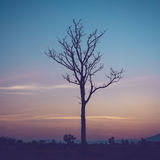 Tree silhouette and twilight. Royalty Free Stock Image