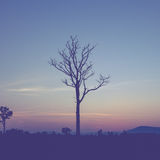 Tree silhouette and twilight. Stock Photo