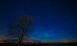 Tree silhouette under the sky Stock Photo