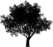 Tree silhouette. Vector black and white tree silhouette. Eps8. Gradients free Royalty Free Stock Images