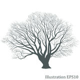 Tree silhouette, Vector eps10 Royalty Free Stock Images