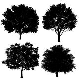 Tree silhouette. At the white background Stock Photography