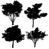 Tree silhouette. At the white background Stock Photo