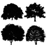 Tree silhouette. At the white background Royalty Free Stock Photo