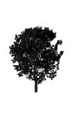 A tree. Silhouette of a tree on white background Royalty Free Stock Photo