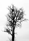 A tree silhouette on white Stock Photography