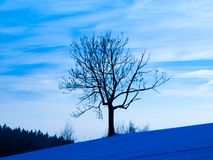 Tree silhouette in winter evening Royalty Free Stock Photos