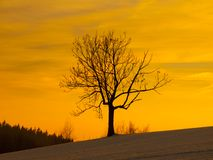 Tree silhouette in winter evening Stock Images