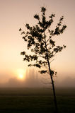 Tree silhouette. Young tree silhouetted against a misty sunrise over open fields with trees on the horizon Stock Photo