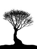 Tree silhouette2 stock photography