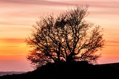 Tree silhouetted against beautiful sunset sky royalty free stock photography