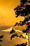 Tree  silhouetted against golden sunset Royalty Free Stock Images