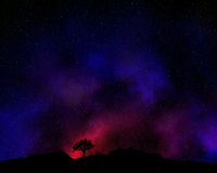 Tree silhouetted against a night sky. With nebula Royalty Free Stock Image
