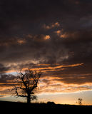 Tree silhouetted against a sunset royalty free stock images