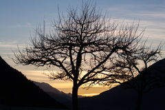 Tree. A tree silhouetted against a warm autumn sky in the alps Royalty Free Stock Photography