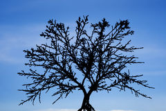 Tree silhouetted with blud sky Royalty Free Stock Photo